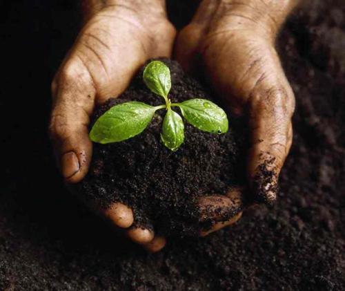Почва с ростком