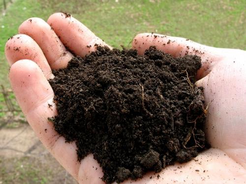 Почва в ладони