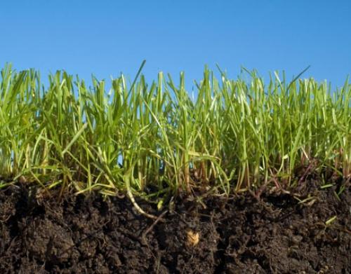 Почва с ростками