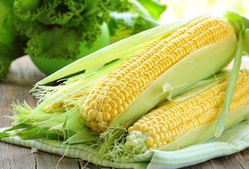 Свежая кукуруза в початках