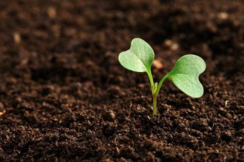 Зеленые ростки в почве