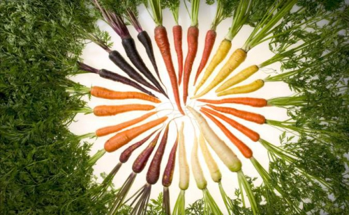 Морковка разных сортов
