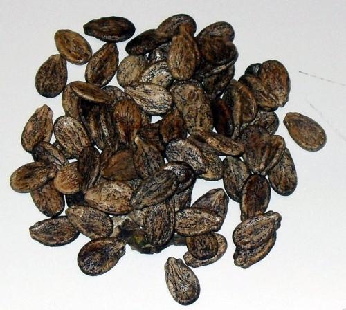 Как обработать семена