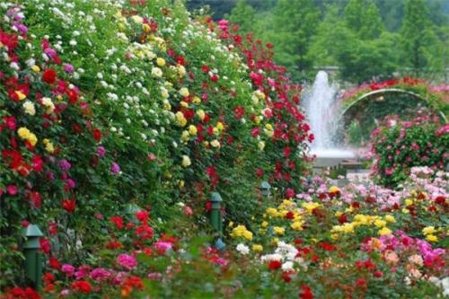 Цветочные кусты в саду