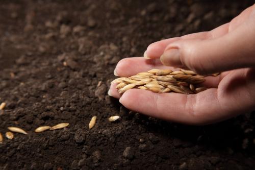 Подготовка семян к посадке в грунт