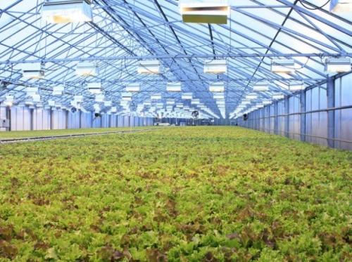Растущая зелень
