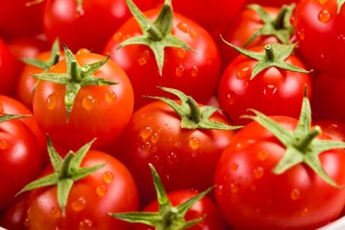 Созревшие помидоры