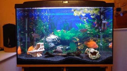 Домашний аквариум с грунтом