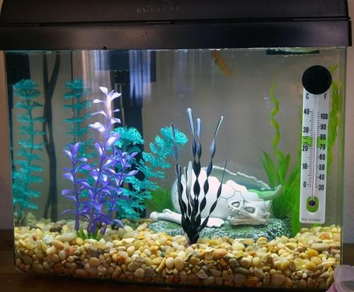 Грунт в аквариуме дома