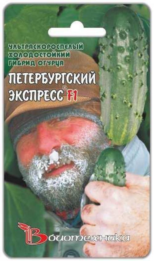 Огурцы для открытого грунта в Сибири
