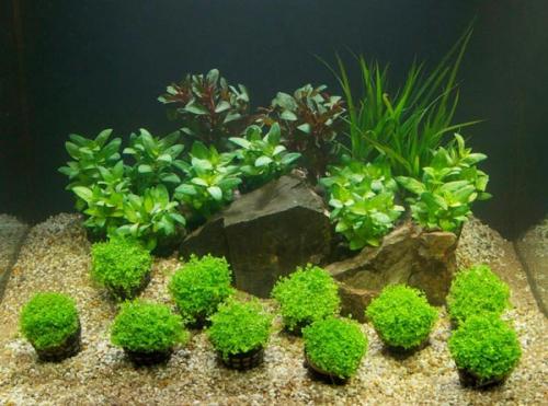 Растения в грунте для аквариума