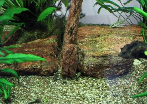 Белый, голубой и синий грунт для аквариума