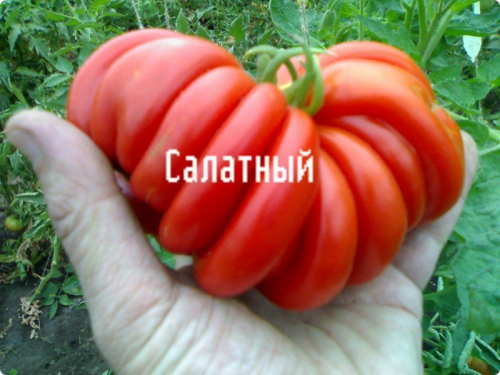 Необычный сорт томатов для салата