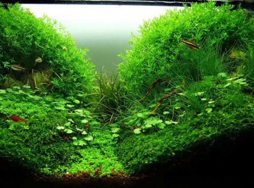 Красивое дно аквариума