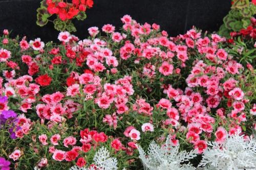 Растущие цветы в открытом грунте