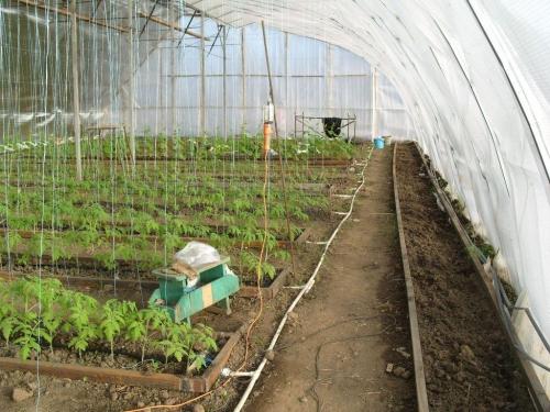 Растения в теплице из поликарбоната