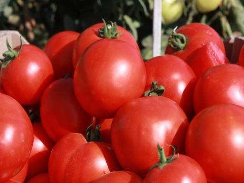 Красные помидоры, выращенные в теплице