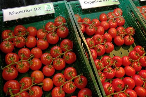 Выращенные в открытом грунте томаты
