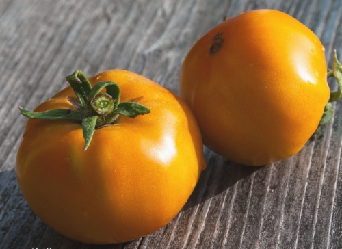 Два желтых помидора на столе