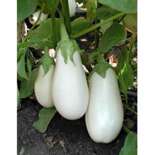 Баклажан белого цвета